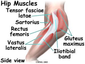 ligaments, tendons, and muscles